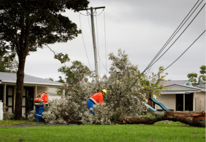 tree pulling down power lines
